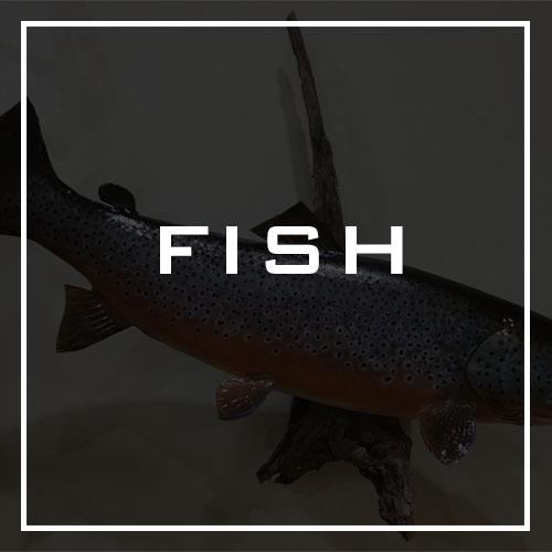 Lane's Taxidermy Fish