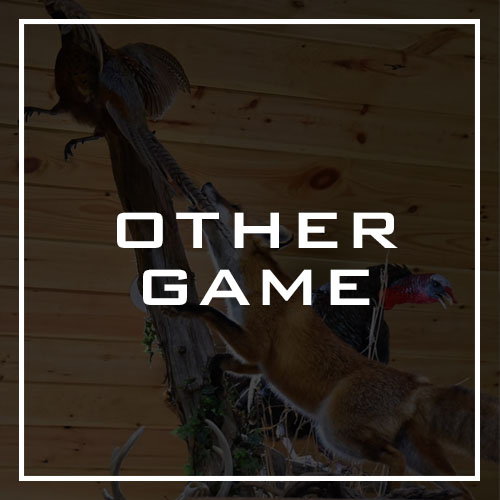Lane's Taxidermy Other Game